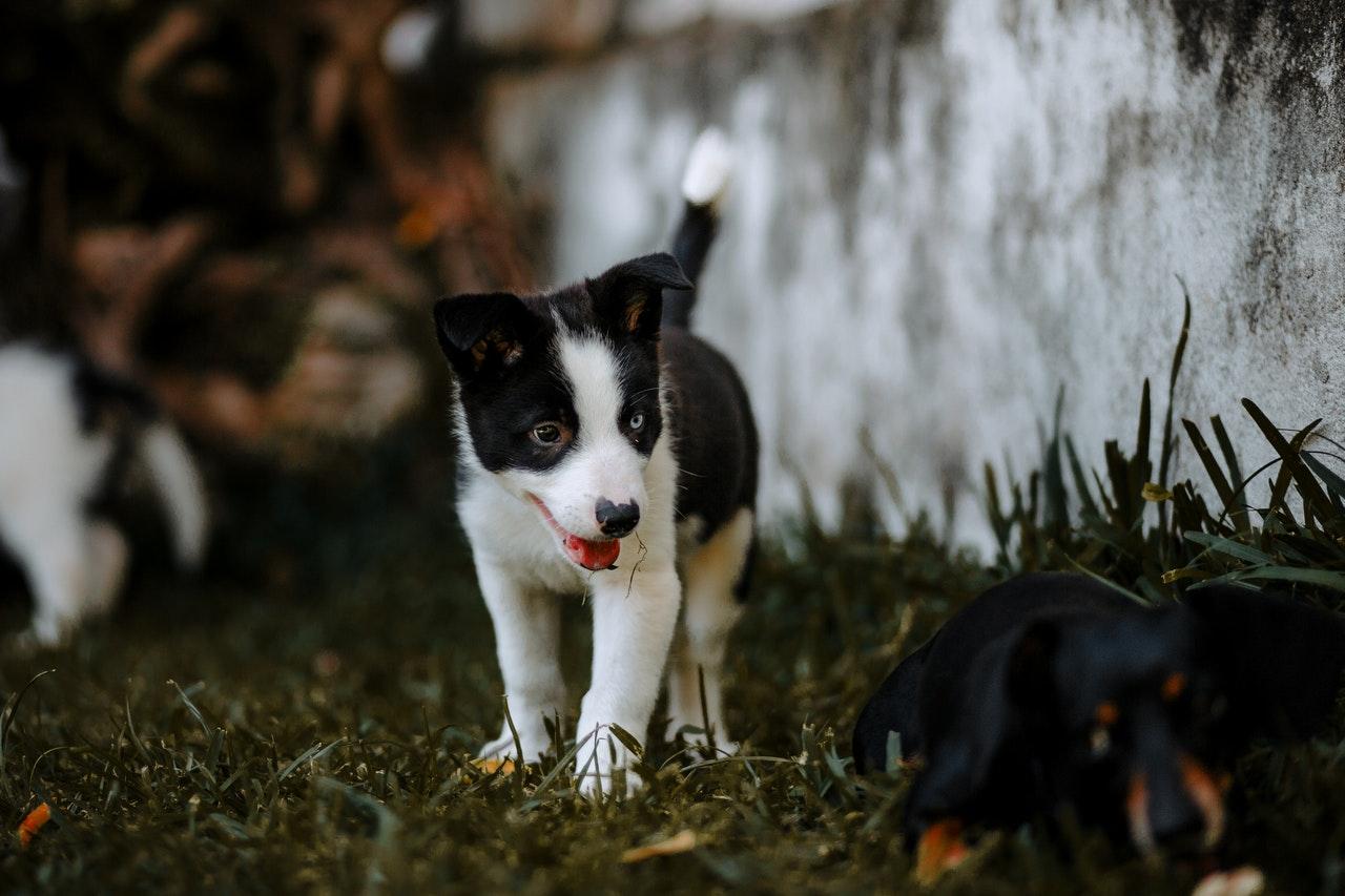 Hondenuitlaatservice Helmond